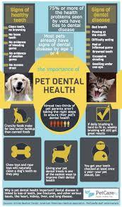 Dog Teeth Health Chart Say No To Dental Disease Brush Your Dogs Teeth Golden Woofs