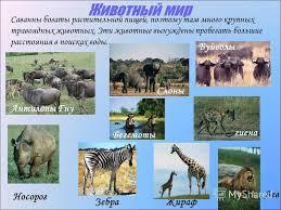 Презентация на тему Природные зоны Африки класс Природные  15 Животный