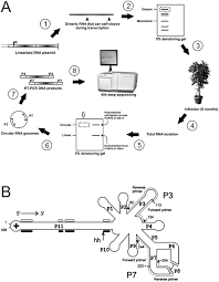 journal.pone.0087297.g001 plos one deep sequencing of the peach latent mosaic viroid on template of transcription