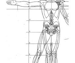 Human Proportions Chart Creating A Figure Armature For Sculpture Armatures