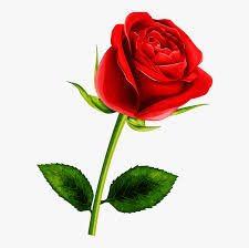 rose flower clipart hd png