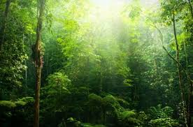 Image result for energy life force ancient forest