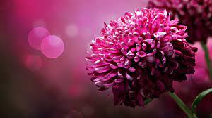Flower desktop wallpaper ...