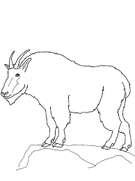 west texas mountain lion animal coloring pages page goat outline colouring
