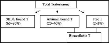 Testosterone Level Chart By Age What Are Normal Testosterone Levels For A Man Full Chart