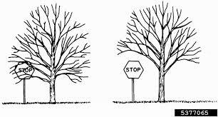 exmark wiring diagram in photo album wire diagram images oak tree diagram wiring diagrams pictures wiring oak tree diagram wiring diagrams pictures wiring