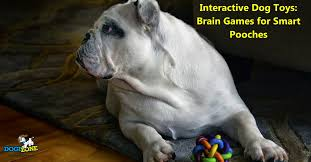 ways to stimulate your dog s brain brain