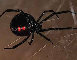 Raleigh, NC Spider Control, Exterminators | Get Rid of Spiders