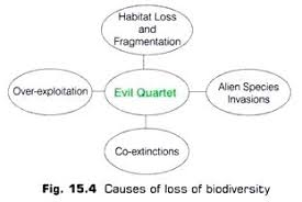 essay on biodiversity environment causes of loss of biodiversity