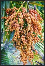 How To Identify Species Of Palm Trees  OwlcationPalm Tree Orange Fruit