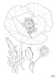Poppy Flower Coloring Page From Poppies