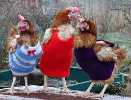 Chicken Sweater Pattern Delectable You Will Love These Knitted Chicken Sweaters Free Patterns The WHOot
