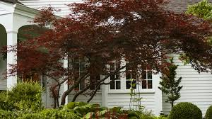 Best 25 Small Trees Ideas On Pinterest  Landscaping Trees Good Trees For Backyard