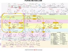Iubmb Nicholson Metabolic Pathways Chart Iubmn Nicholson Minimaps Gifs