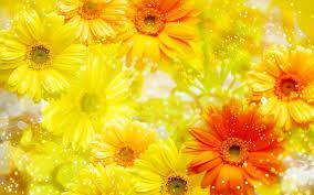 Flower Soft Yellow Background ...