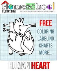 Small Picture Human Heart coloring page with coded numbers for making some parts