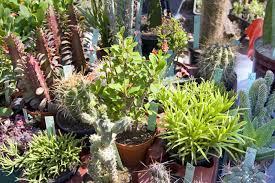 plants around the swimming pool