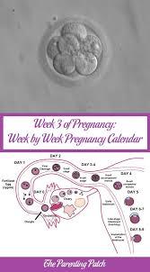 Pregnacy Clander Week 3 Of Pregnancy Week By Week Pregnancy Calendar Parenting Patch