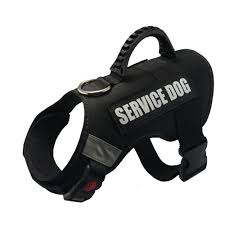 service dog in training vest ...