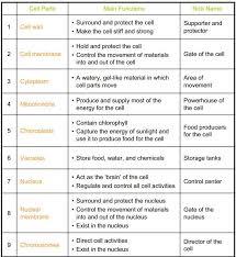 Cell Analogy Worksheet - wiildcreative