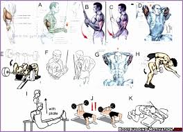 Arms Bodybuilding Exercises Chart 511700aglbpt Fresh 45 Best