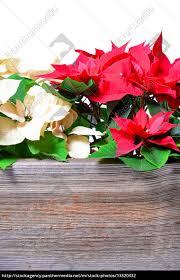 Lizenzfreies Foto 13320332 Weihnachtsstern Holz Hintergrund