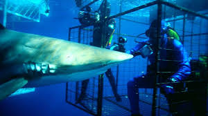 nation s shark experts you could ve had this job
