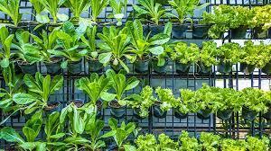 plant in your vertical vegetable garden
