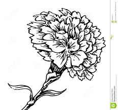 цветок гвоздики эскиз татуировки иллюстрация вектора иллюстрации