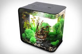 office desk fish tank. aquarium for office the fern and mossery desktop or home desk fish tank