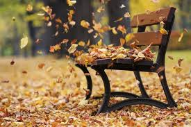 Image result for image of the wind blowing the autumn leaves