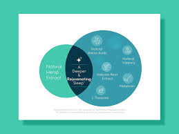 Infographic Venn Diagram Venn Diagram Infographic By Alka On Dribbble