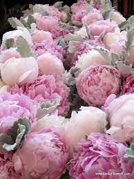 Romantik şakayık çiçeği | Şakayıklar, Egzotik çiçekler, Bi̇tki̇