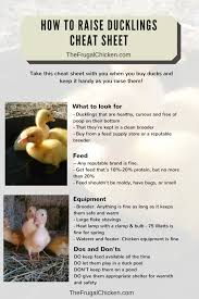 best ideas about how to raise ducks keeping 17 best ideas about how to raise ducks keeping ducks raising ducks and duck coop