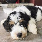 SAMSON (@samson_the_bmd) Followers | Instagram photos, videos, highlights  and stories