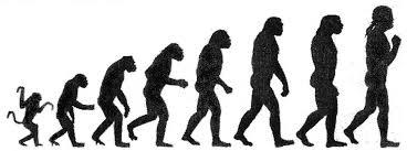 File Darwin Chart Png Wikimedia Commons