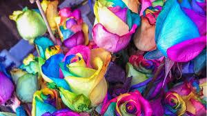 Farben Und Ihre Bedeutung Als Wandfarbe Kleidung Mehr