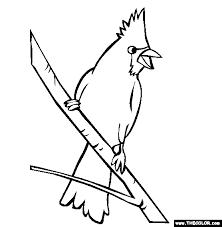 Cardinal Bird Drawing At Getdrawingscom Free For Personal Use