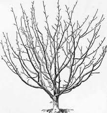 How To Make Homemade Dormant Oil Spray For Fruit Trees  Articles Dormant Fruit Trees