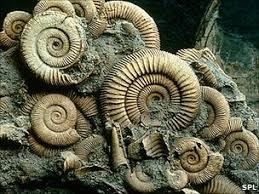 Image result for fossils