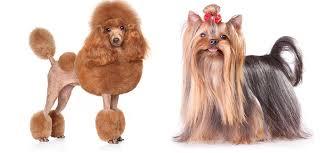 Dog Haircut Chart 31 Dog Grooming Styles And Trims Playbarkrun