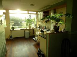Vertical Herb Garden In Your Kitchen Best Kitchen Plants Plants For Kitchen To Decorate It Balcony