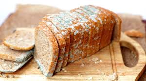 What Causes Mold To Grow On Bread Even Bread That Been Touched Will