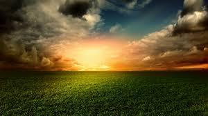 Wallpaper Green grass Thick forest Blue sky Nature 5051
