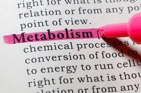 Resultado de imagem para how to improve metabolism