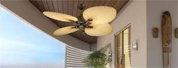 palm fan expand your horizons