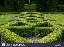 Small Picture box hedge hedging parterre clipped cut design designed formal