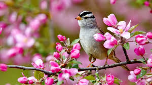 images of flowers and birds.  And Flowers Bird Spring Flowers Colorful Forces Nature Colors Birds Splendor  Pink Tree Buds Landscpae Lovely Paradise Blossoms Best Wallpapers For High  In Images Of And D