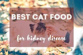 k d cat food alternative. Unique Alternative Hills Kd Cat Food Best For Kidney Disease Fluffy Kitty   Intended K D Cat Food Alternative R