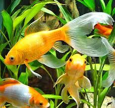 petsmart animals fish. Plain Petsmart Healthy Aquarium Water For Petsmart Animals Fish L